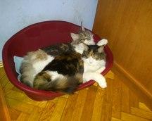 Bianka i Bora (7 miesięcy)