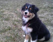SWEET DOG Sofi Farm