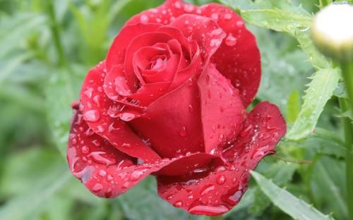 Deszcz Majowy Wiersze Dla Dzieci Wiersze Religijne