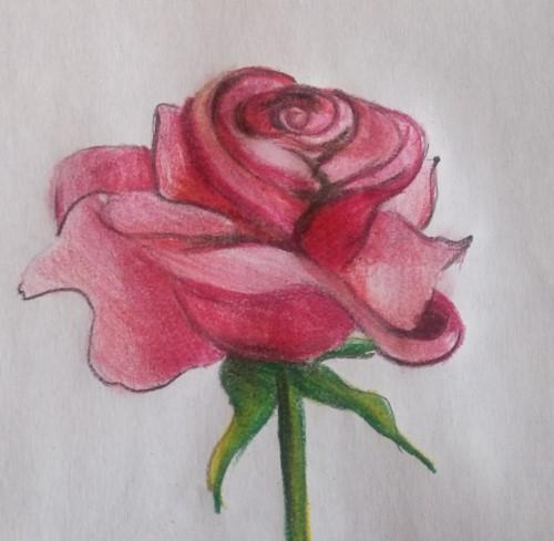 Kalafior I Róża Wiersze Dla Dzieci Wiersze Religijne