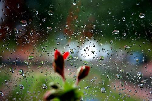 Wiosenny Deszcz Wiersze Dla Dzieci Wiersze Religijne