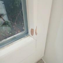 Pies podrapał nowe drzwi? Naprawimy, stolarz wrocław