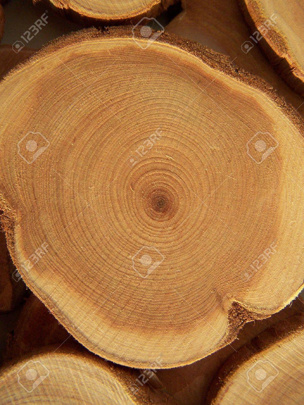 przekrój drewna jałowca twardziel