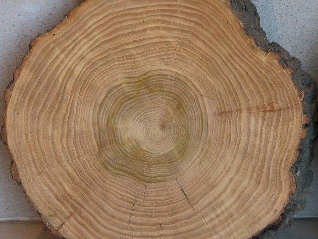 przekrój drewna wiązowego wrocław