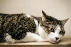 Mein Tier das ist eine Katze.- Moje zwierzątko to kot.