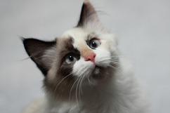 die Katze - kotka