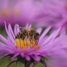 Koło Pszczelarzy Tokarnia